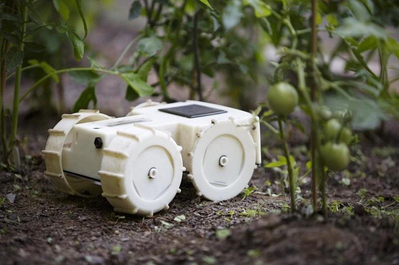 robotic-the-garden