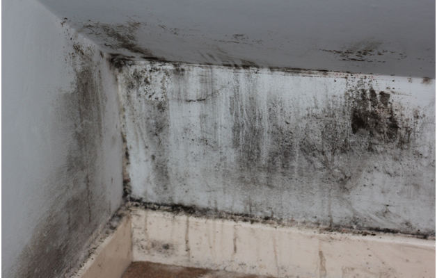 How to triumph over damp and mould this winter