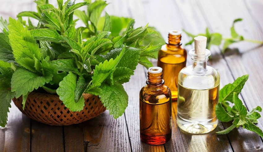 5 Practical uses of peppermint oil that you will like to know