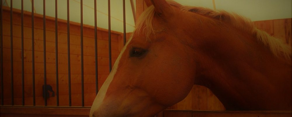 Protecting an Equine Investment