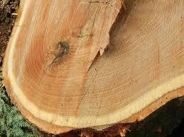 Oak Beams – Low Maintenance Timber