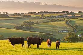 Things to Think About if you are Considering a Move to the Countryside